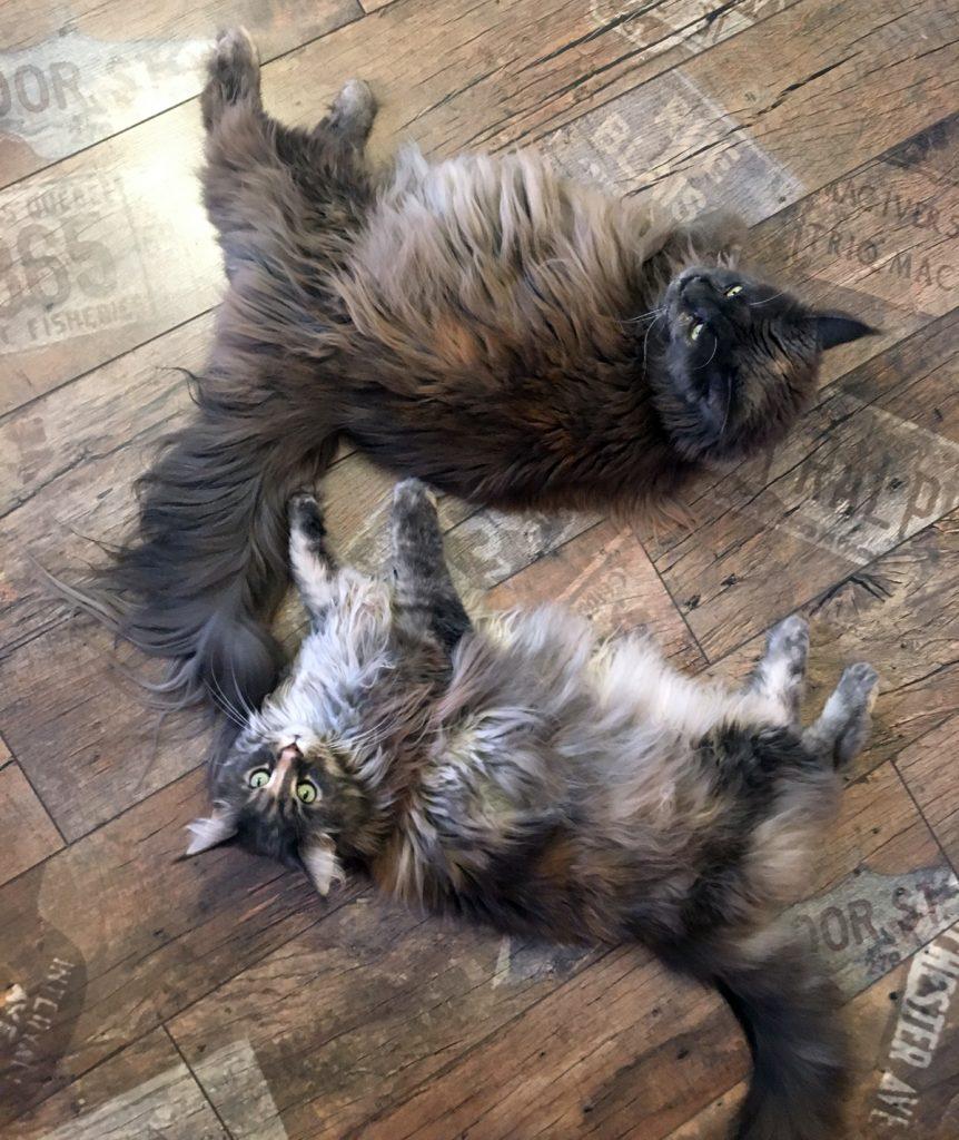 Про рабочий кошмар, и как настроение передается кошкам!